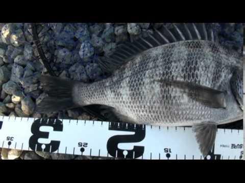 Fishing Australia Blac...