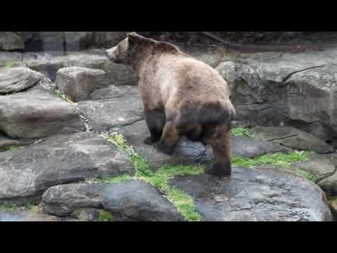 The North Carolina Zoo - North America Part 2