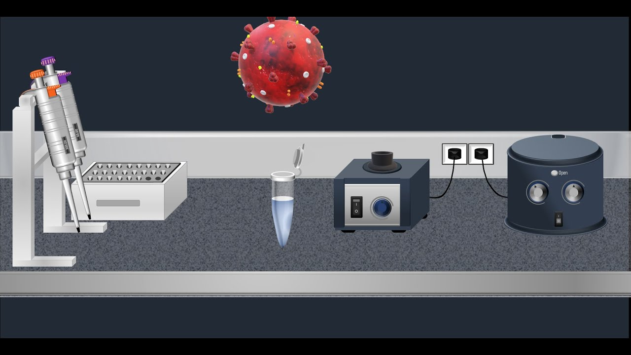 Coronavirus Test: Real time RT-PCR - Animation video