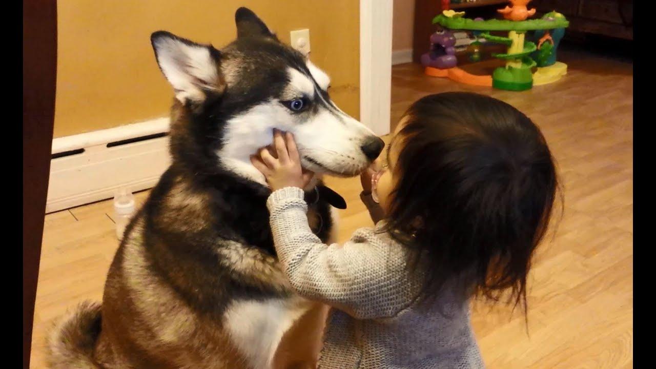 Cute Newborn Baby Hd Wallpapers Baby Loves Siberian Husky Dog Youtube