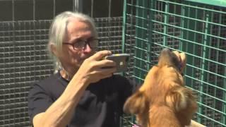 Help a Shelter Pet Get Adopted - ShelterMe.com