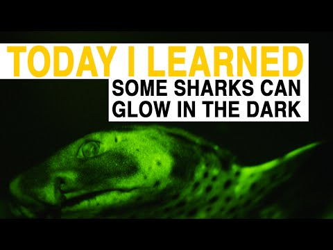TIL: Some Sharks Can Glow In The Dark | Today I Learned