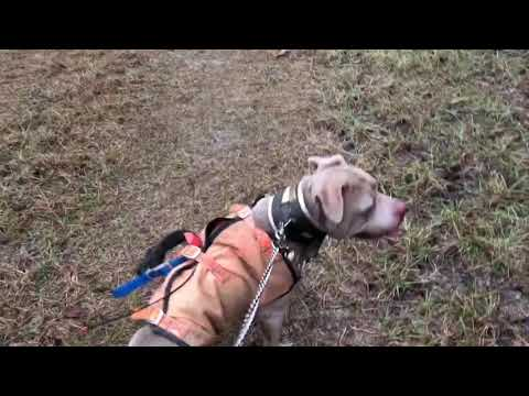 Hog Hunting With Dogs (01/18/19)