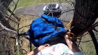 climbing cat rescue, Grubb tree service charlottesville va