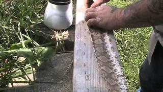Tanning Copperhead snake skin