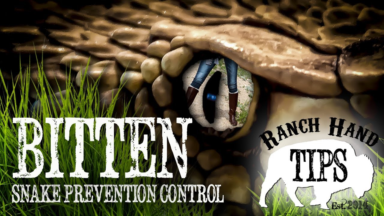 How to prevent snakes from coming in your yard - Ranch ...