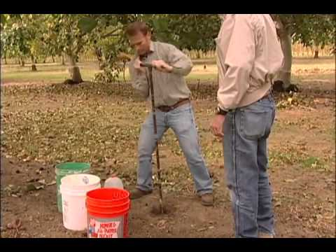 Taking Soil Samples Part  3: Taking  Samples in the Orchard