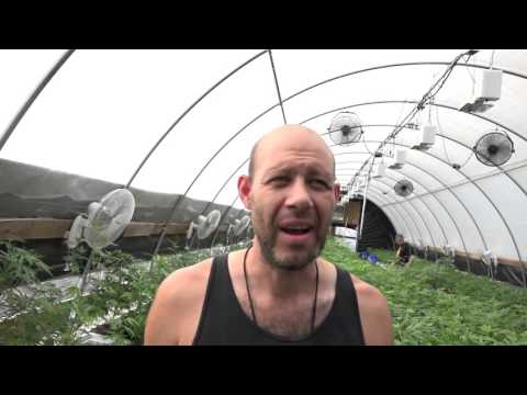 Cannabis Greenhouse Systems Grower Testimony