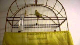 Repeat youtube video canario metralha sorocaba polaco