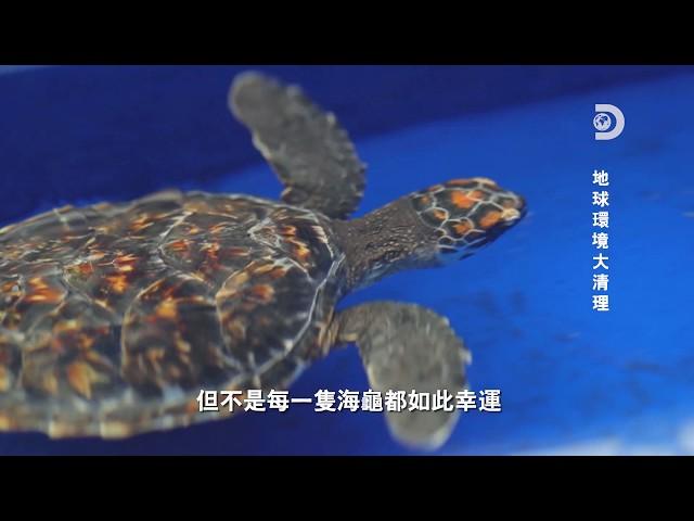 你能吃下150片塑膠嗎?海龜保育中心的拯救海龜大作戰:《地球環境大清理》