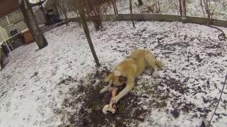 Собака Найда и кость, продолжение
