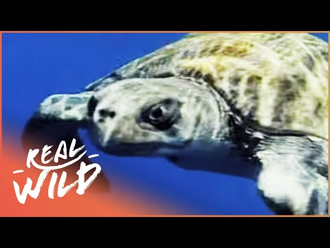 Ocean Marine Habitats In Deepest Trenches of Australia | Amazing Animals | Real Wild Documentary