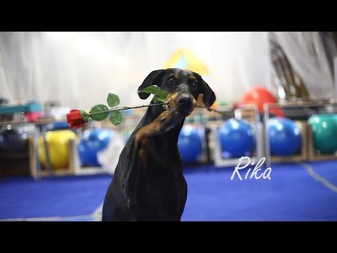 .:: Dobermann RIKA | dogdancing and tricks WATCH IN HD!