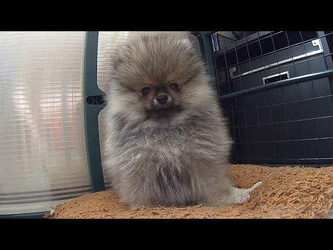 ПИЖОН стрижка собак и кошек в Хабаровске -44-03