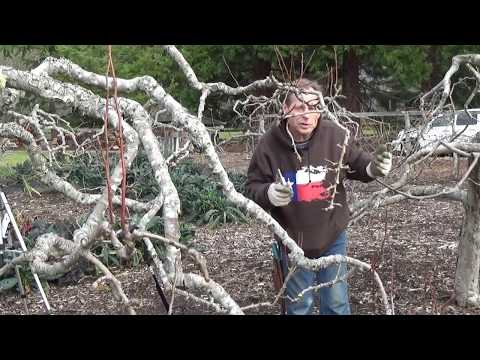 The Art Of Pruning Back To Eden Garden L2Survive with Thatnub