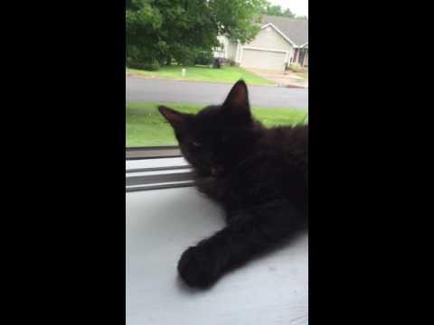 Kitten Talk
