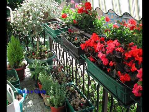 Begonie  Gerani e Petunie  il mio balcone  YouTube