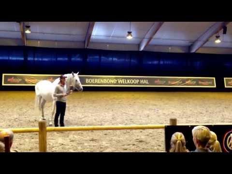 Clinic Frederic Pignon - Horse Event Deurne
