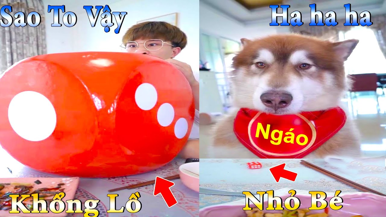 Thú Cưng TV | Dương KC Pets | Ngáo Husky Troll Bố #22 | chó thông minh vui nhộn | funny cute dog