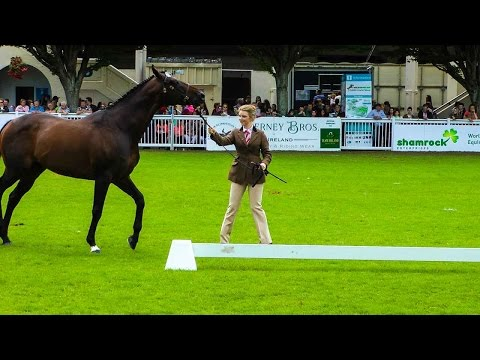 Dublin Horse Show Thoroughbred Stallion Parade RDS 2015