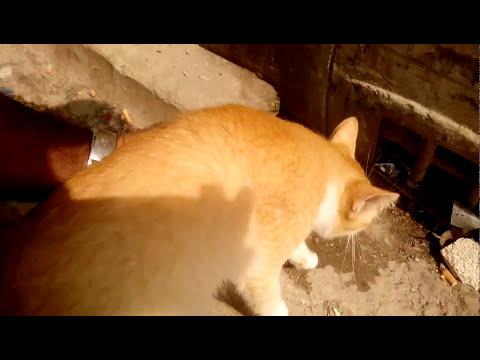 Cat so funny video 2017