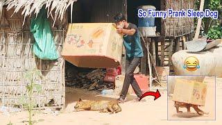 Best Funny Prank Dog super Huge Box vs Prank on Sleep Dog stuck in The Box so Funny, New Prank Funny