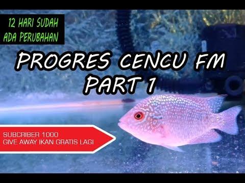 Progres Burayak Louhan Part 1 Ikan Cencu Free Marking Fm Youtube