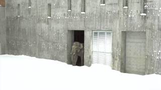 Elephants enjoy snow at the Oregon Zoo
