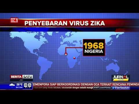 Penyebaran Virus Zika - YouTube