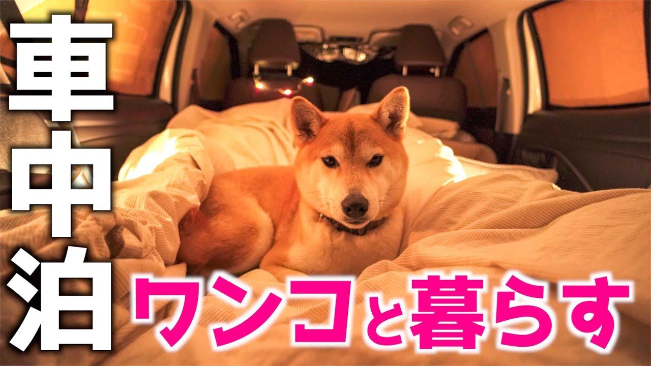 【車中泊】ワンコとまったりキャンプルーティン | ヤリスクロス | 柴犬 | キャンプ飯