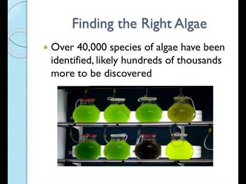 algae biofuel part 2 the dynamics of growth amp production