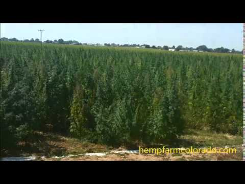 Gorilla grow-Hemp Farm Colorado LLC