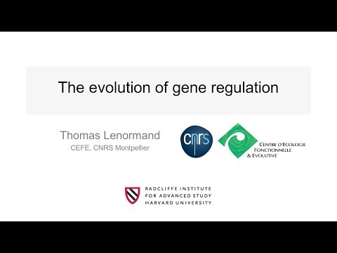 The Evolution of Gene Expression | Thomas Lenormand || Radcliffe Institute