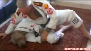 Pitbull BJJ GRAPPLERSPLANET.COM