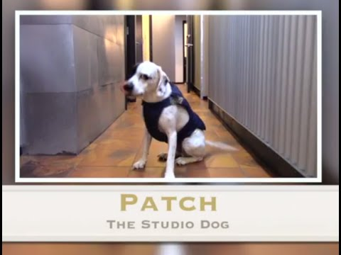 Meet Patch, The Recording Studio Dog. At St. Louis Jupiter Recording Studio