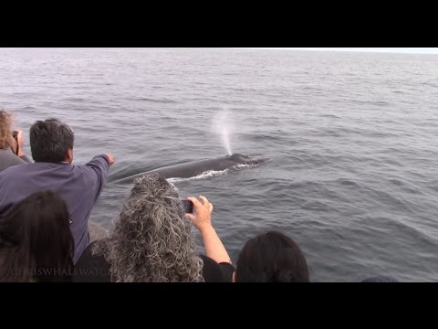 4.21.16 Humpback Whales & Northern Right Whale Dolphin #Monterey