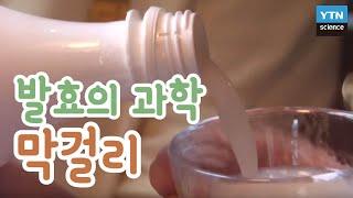 발효의 과학 막걸리 / YTN 사이언스