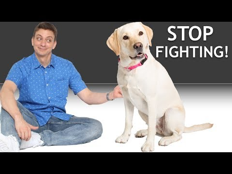 how-do-i-get-my-2-dogs-to-stop-fighting?-(answering-a-patreon-question)