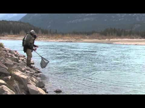 Fly fishing invermere