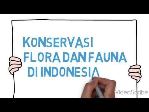 konservasi fauna dan flora di indonesia