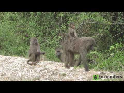 Uganda and Rwanda Trip 2017