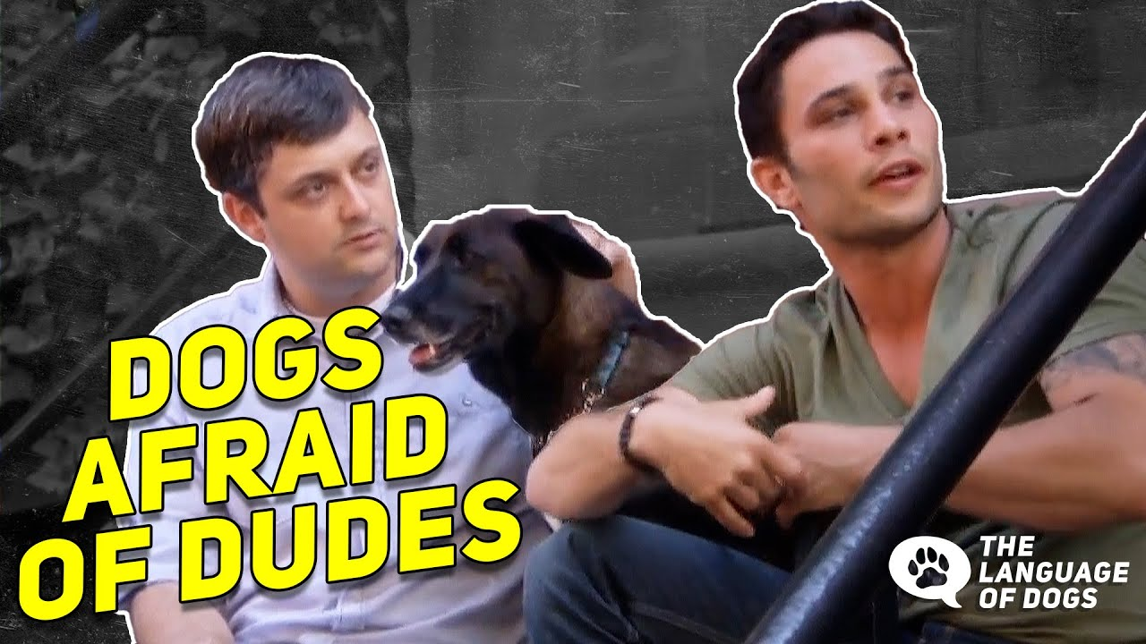 Fixing A Dog's Fear Of Men w/ Dog Expert Justin Silver