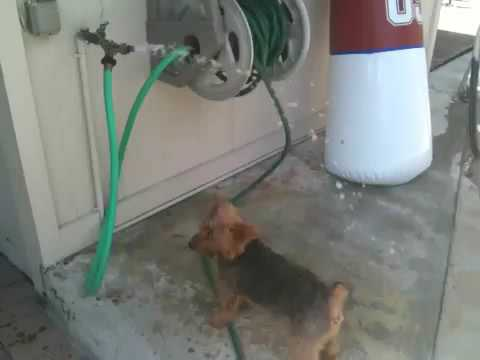 Thirsty Doggie..