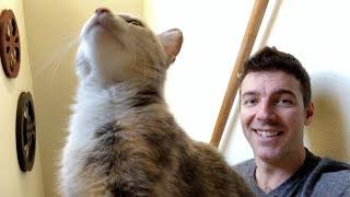 cute-homeless-kitten-update-her-vet-visit