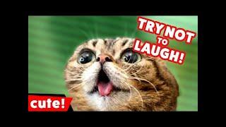 Funny cat fails compilation