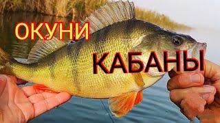 Окуни кабаны Микроджиг с Shimano soare bb s700suls 0 4 4гр Рыбалка на крупного окуня