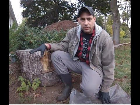 How I kill Poison Ivy (Organically) 3 tips