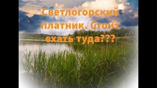 Платник Светлогорска Стоит туда ехать Ловля Карпа Карася платник карп карась рыбалка