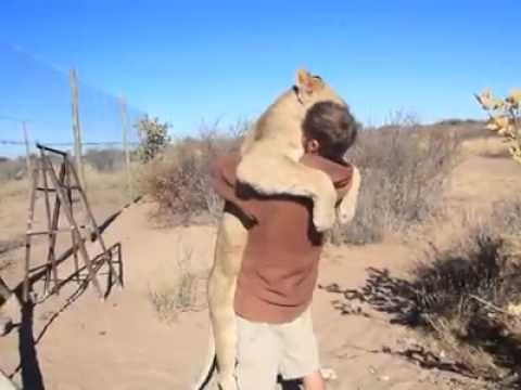 Дружба Между Львом и человеком