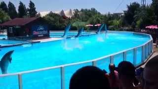 Шоу с дельфинами - Spettacolo con i delfini